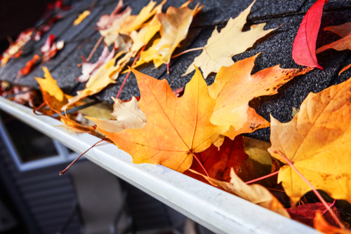 Fall leaves on a residential rooftop